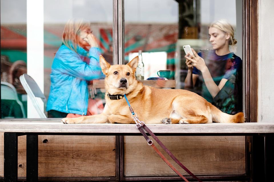 Dog at a restaurant