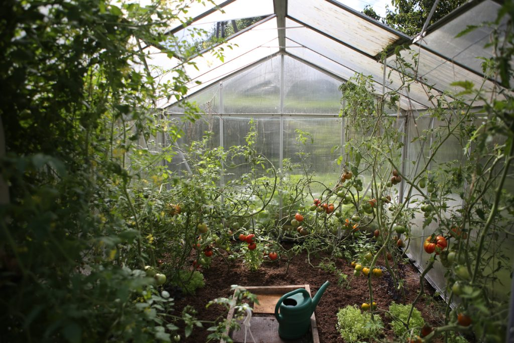 irrigation plant garden