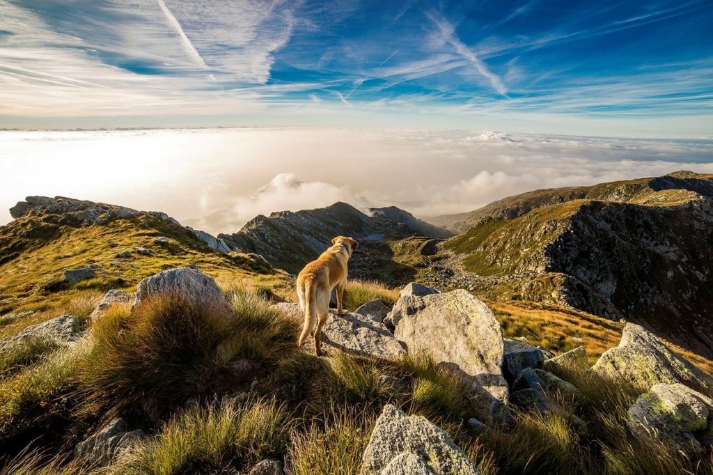 dog on mountain trail