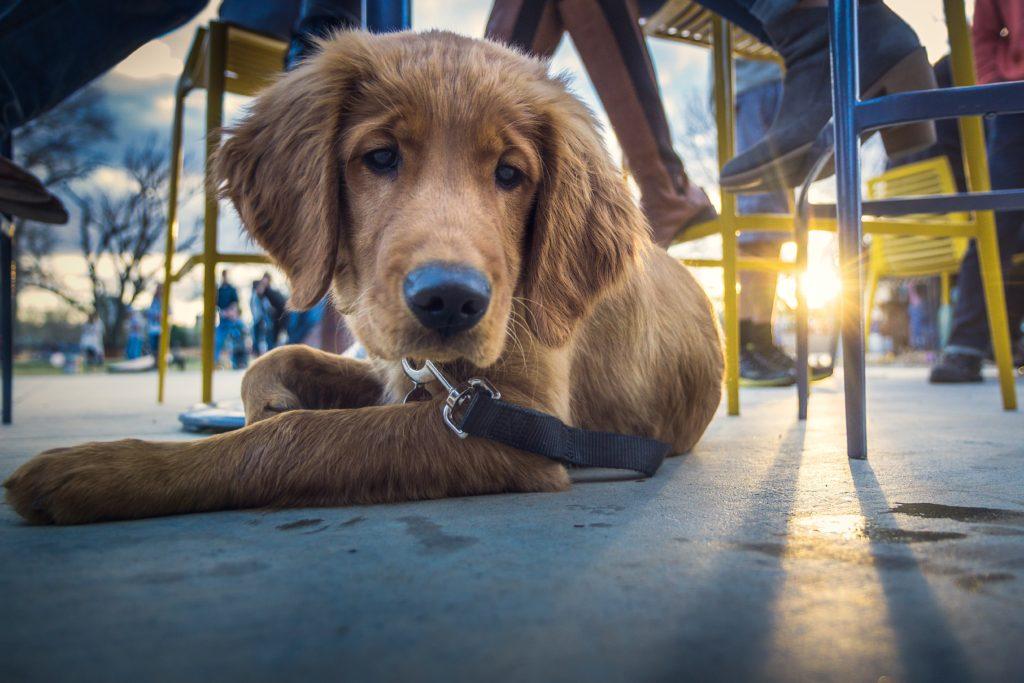 dog laying outside restaurant